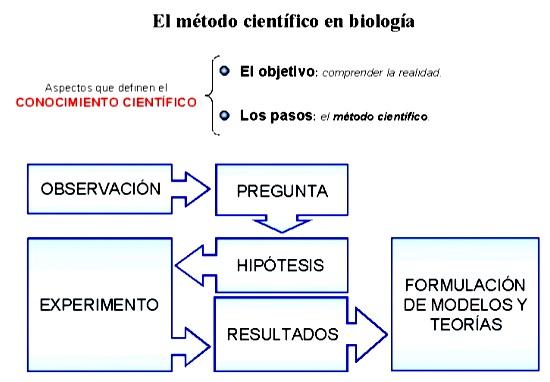 Modelo De Metodo Cientifico